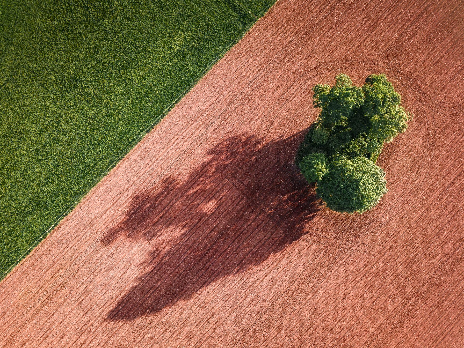 Broccoli med superkræfter